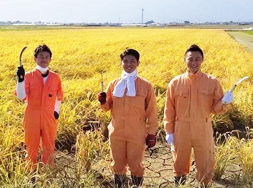 稲刈り(阪神米穀株式会社)